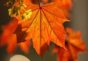 Kireçlenmeden Çınar Yaprağı ile Kurtulun