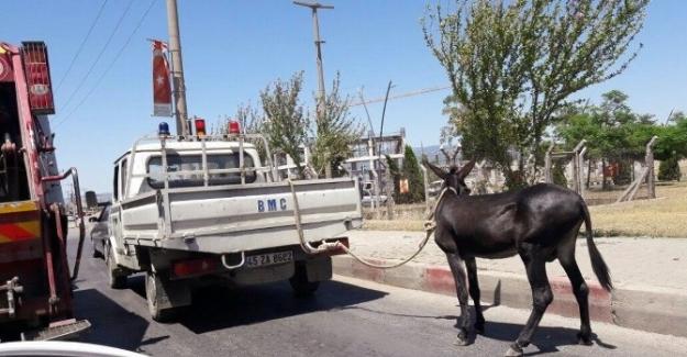 Manisa'da eşeğe kamyonetli eziyet