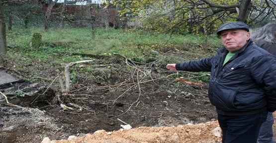 Bursa'da ağaç katliamı ağlattı