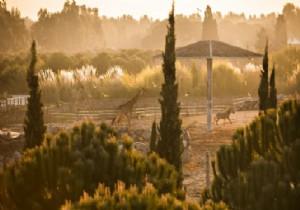 Doğal Yaşam Parkı 6 Akdeniz Ülkesini Temsil Edecek