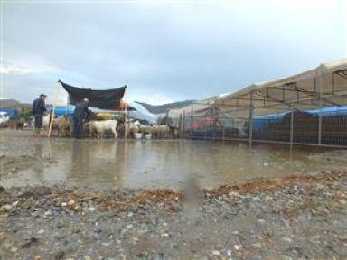 Selçuk'ta Yağmur Kurbanlıkları Perişan Etti