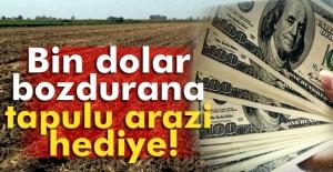 Bin dolar bozdurana tapulu arazi hediye
